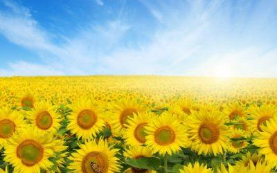 Spring and Renewal: Infinite Lift